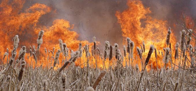 Под Павлоградом едва не загорелась ферма