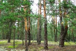 Ходити в ліс – зась!