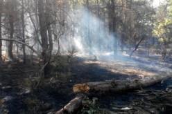 Пожежа в Павлоградському лісовому господарстві. Ліс навмисне підпалили? (ФОТО)
