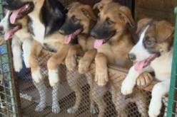 Павлоградські безпритульні собаки та коти матимуть власне житло