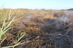 Сьогодні в Павлограді горіло торфяне поле