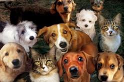 Павлоградські собаки та коти мають житло