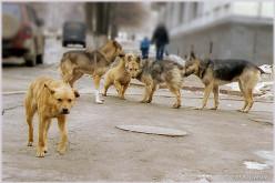 На павлоградців нападають бродячі собаки