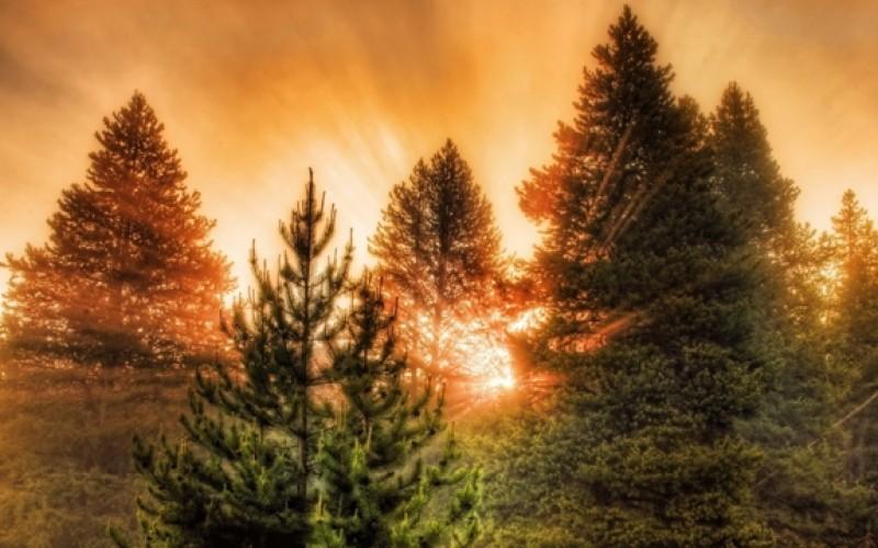 Вуличні гімнасти Павлограда займуться відновленням лісу