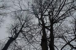 У Павлограді знову падали дерева