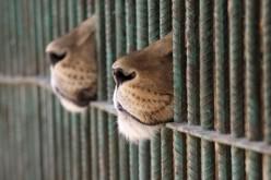 Депутати заборонили виставки диких тварин і пересувні зоопарки
