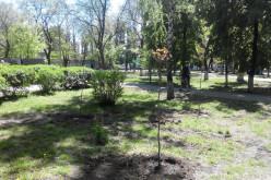 В центрі Павлограда з'явилися молоді клени, дуби і ялинка (ФОТО)