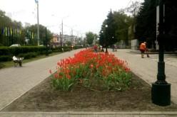Комунальники висадили 3 тис. нових квітів та відремонтували туалет