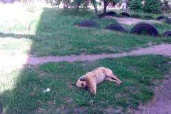 У Павлограді мешканці багатоквартирного будинку труять собак