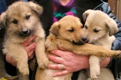 «Щоб зберегти зразковий імідж ОСББ, безпритульних собак закопали живцем»