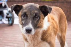 Решить проблему бездомных животных в Павлограде требуют с помощью петиций