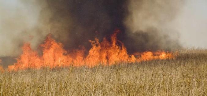 На выходных в Павлограде горело более 6 га сухостоя