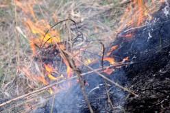 В Павлоградском районе едва не загорелся лесхоз