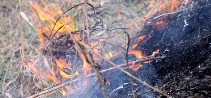 У парку ім. 1 Травня згоріло 2 га сухої трави