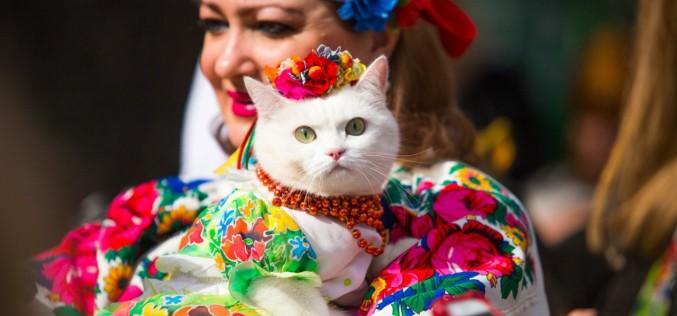 День флага в Павлограде отметят Парадом вышиванок