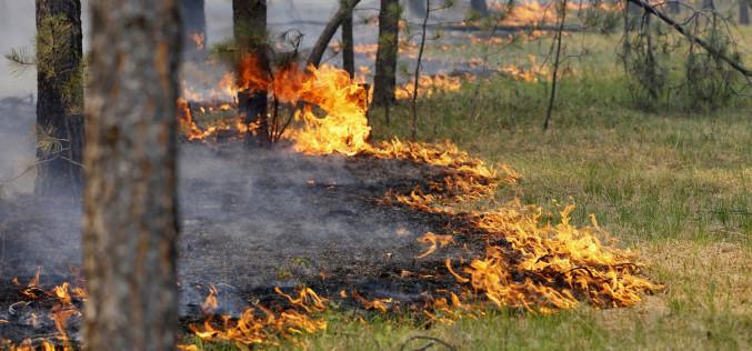 На Павлоградщині встановили найвищий клас пожежної небезпеки
