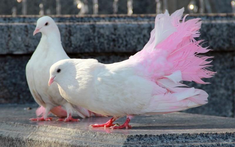 В Павлоград привезли сотни птиц разных пород (ФОТО)