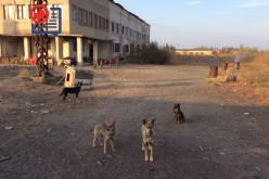 Какова судьба приюта для бездомных животных в Павлограде?