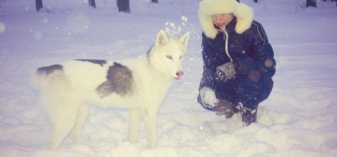В Павлограде просят создать площадки для выгула собак