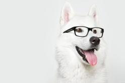 Ученые доказали, что собаки с возрастом становятся… умнее