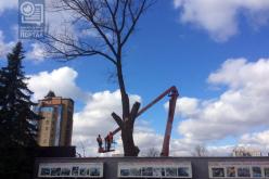 Когда спилят аварийные деревья? (ГРАФИК)