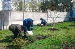 Павлоградские спасатели высадили более 120 деревьев