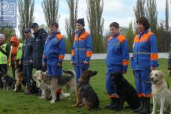 В Павлограде состоялись соревнования собак-спасателей (ФОТОРЕПОРТАЖ)