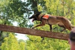 В Павлограде пройдут Всеукраинские соревнования собак-спасателей