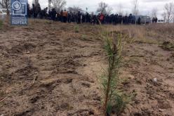 На территории Павлоградского «водозабора» активисты высадили 1400 сосен (ФОТО и ВИДЕО)