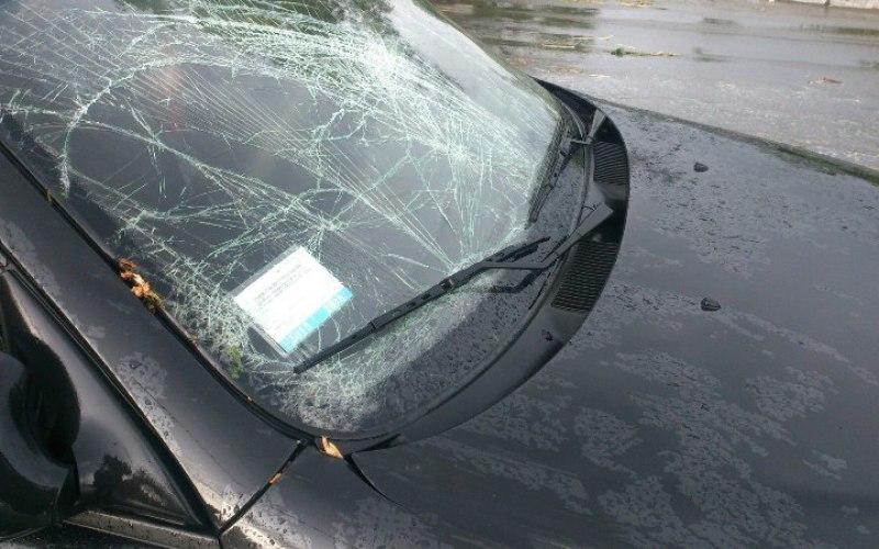 В Павлограде дерево упало на автомобиль (ФОТО)