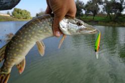 С 21 мая уже можно начинать рыбачить