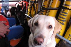 Собаку-спасателя не пустили в автобус «Павлоград-Днепр»