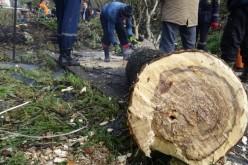 В Павлограде спасатели боролись с аварийным деревом