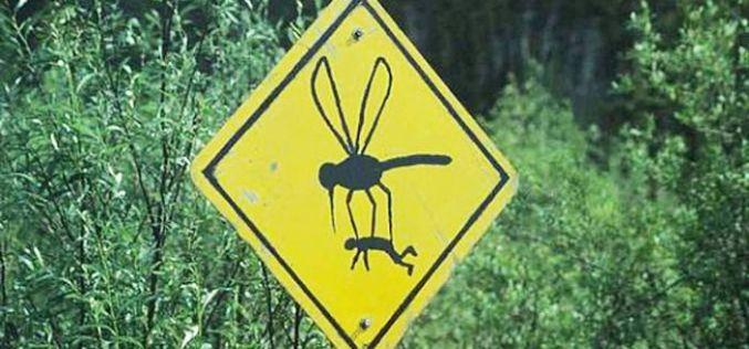 Нетрадиционные методы борьбы… с комарами!