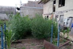 У жителя Павлограда нашли 35 кг марихуаны