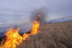 Пожароопасный август: одновременно на линию «101» поступает до 10 вызовов о пожарах