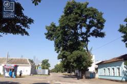 Улица Анны Светличной сохранит старое название (ВИДЕО)