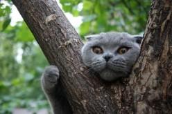 Спасатели подчеркивают, что снимать котов с деревьев в их функции не входит