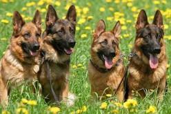 На выходных в Павлограде состоится выставка собак