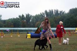 В Павлограде проходит Национальная выставка собак (ФОТО)