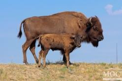 На территории Павлоградского химзавода живут и размножаются дикие животные (ФОТО)