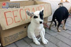 Дайте бездомным животным «ШАНС»!