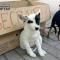 В Павлограде построили приют для бездомных животных (ФОТО)