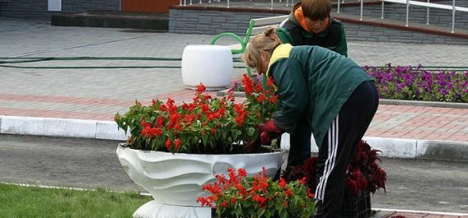 В Павлограде коммунальщики готовятся засадить 4,5 га цветами