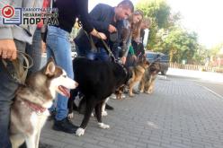 Павлоградцы вышли на совместную прогулку с «хвостатыми» друзьями
