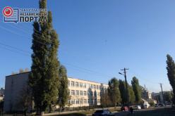 Треть деревьев возле павлоградских школ — аварийные