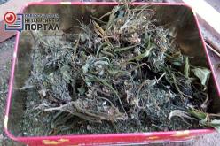 Полиция обнаружила у жителя Павлограда марихуаны на 80 тыс. гривен