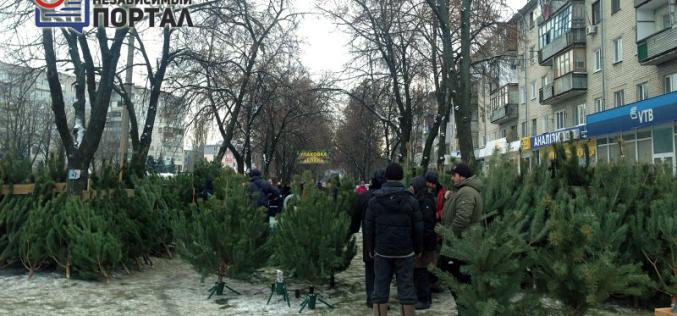 Сколько стоит елка в Павлограде?