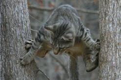 Мужчина полез на дерево за котом и застрял сам