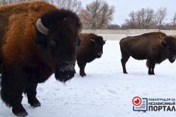 Как зимуют животные в заповеднике Павлоградского химзавода (ФОТО)